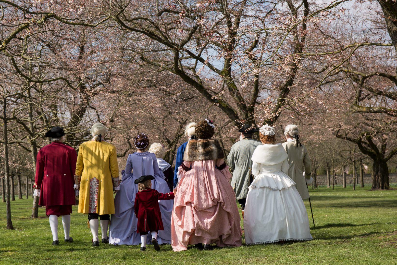 Kirschblüten im Schwetzinger Schlossgarten